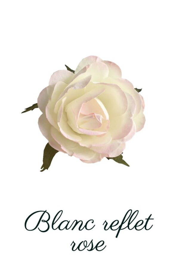 Rose blanc reflet rose copie