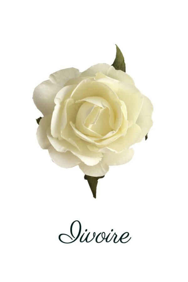 Rose papier ivoire copie